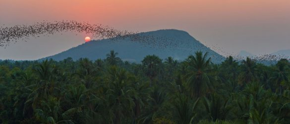 Migliaia di pipistrelli al calar del sole escono dalle grotte danzando in cielo