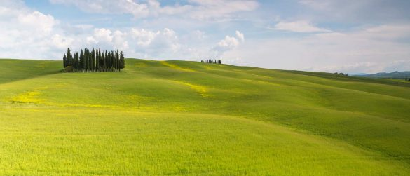 Le morbide colline di S. Quirico d'Orcia con i suoi famosi pioppi