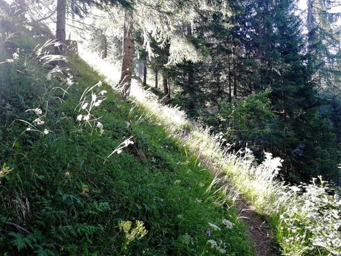 Il silenzioso sentiero botanico immerso nella natura che porta al lago Palù