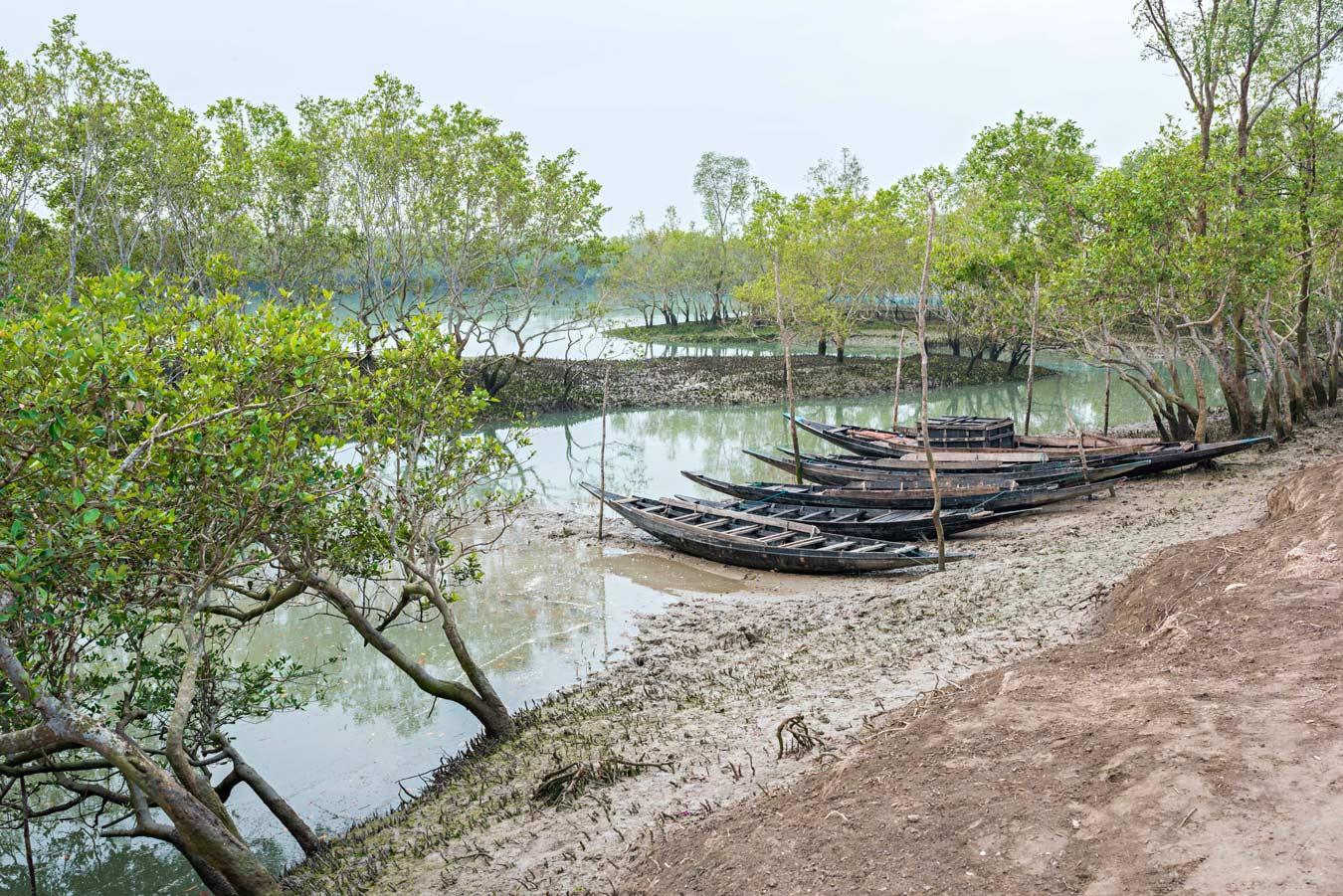 Un bellissimo scorcio della foresta di mangrovie del Bengala con le tipiche imbarcazioni in legno