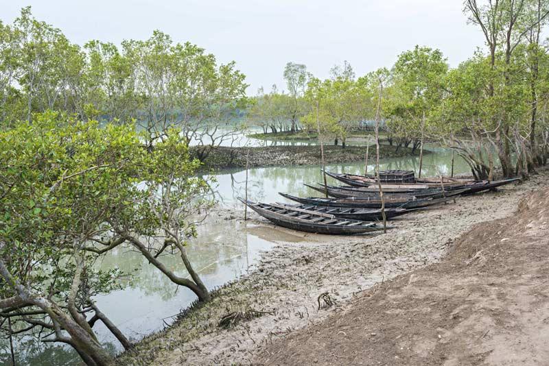 I villaggi nei pressi della foresta del Bengala sono minacciati dal pericolo dell'innalzamento delle acque che potrebbe farli sparire per sempre