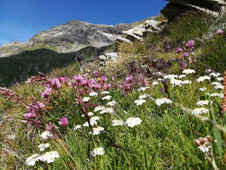 I meravigliosi fiori fanno da padroni durante l'escursione in Val Febbraro